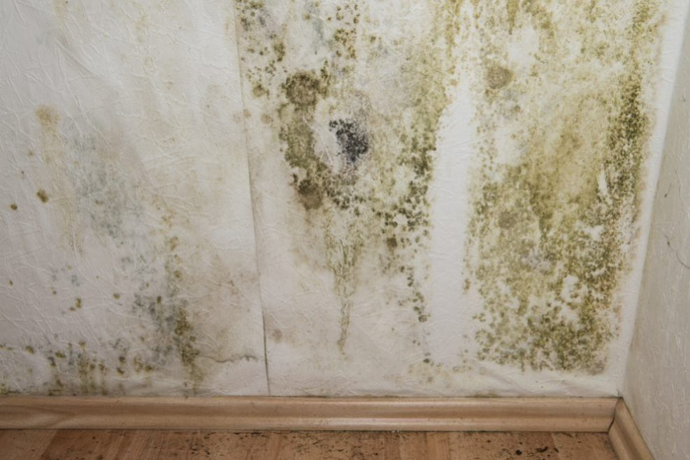 selling house as-is with mold